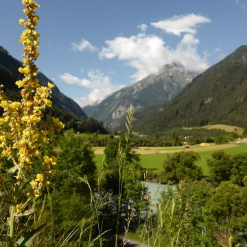 1. Pfundser Kräutertage im Tiroler Oberland