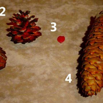Herbsthausaufgabe für den Kräuterkurs
