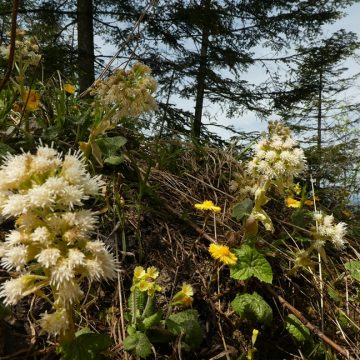 Was die Natur uns verrät: Heilpflanzen gegen Frühjahrserkältungen