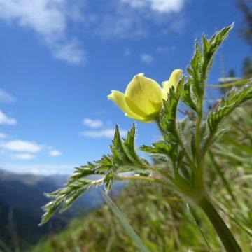 Alpenblumen und Naturglück in Südtirol.