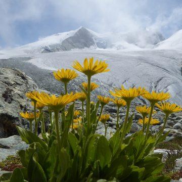 """Vortrag """"Alpenheilpflanzen"""" in Friedberg"""