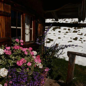 Wintereinbruch und Blütenpracht