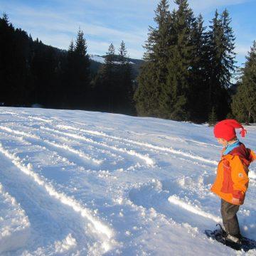 Radiotipp: Naturentdeckungen im bayerischen Winter