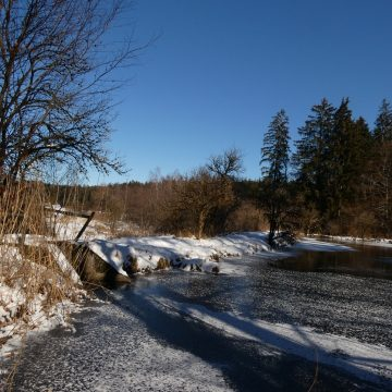 Wintersträucher im Februar