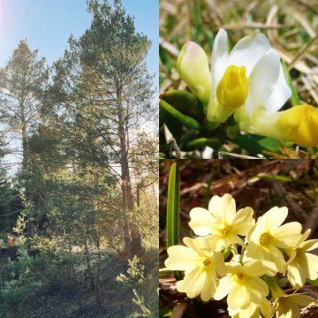 Frühlingserwachen für die Kräuterkurse