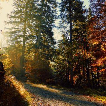 BR Heimat – Podcast 📻: Naturspaziergang im Bayerischen Frühherbst
