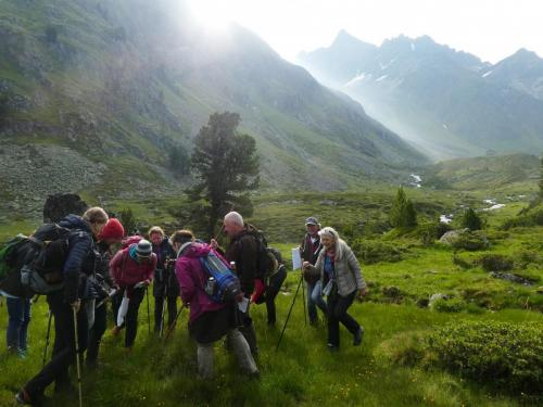 Arnika und Bewunderer - ein Morgen imHochgebirge