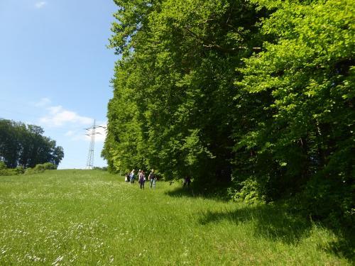 Durch Wiesen und Wälder...